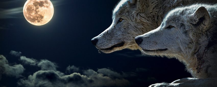 Wolf Full Moon Go Out and Howl