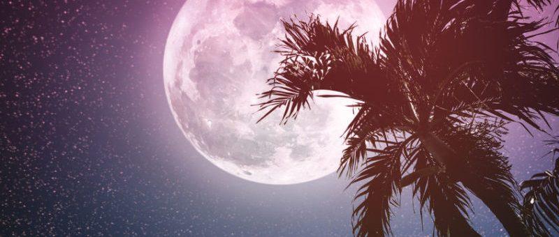 Pink Love Moon
