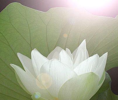 Remote Energy Healing – Wonderworks Healing Arts