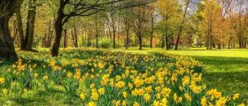 Spring Equinox – Won...